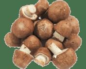 خرید قارچ بادام