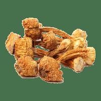 خرید قارچ بادام خشک
