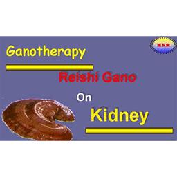 تاثیر گانودرما روی کلیه