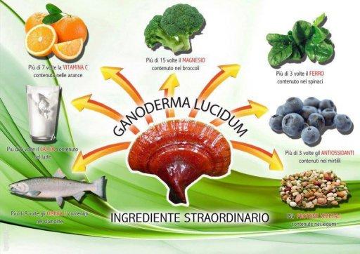 گانودرما چیست؟
