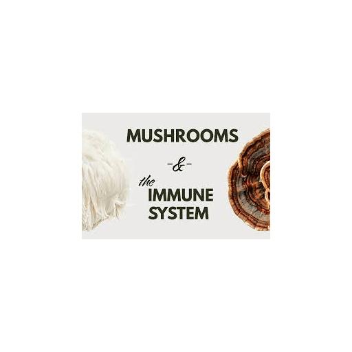 تقویت سیستم ایمنی بدن با قارچ ها
